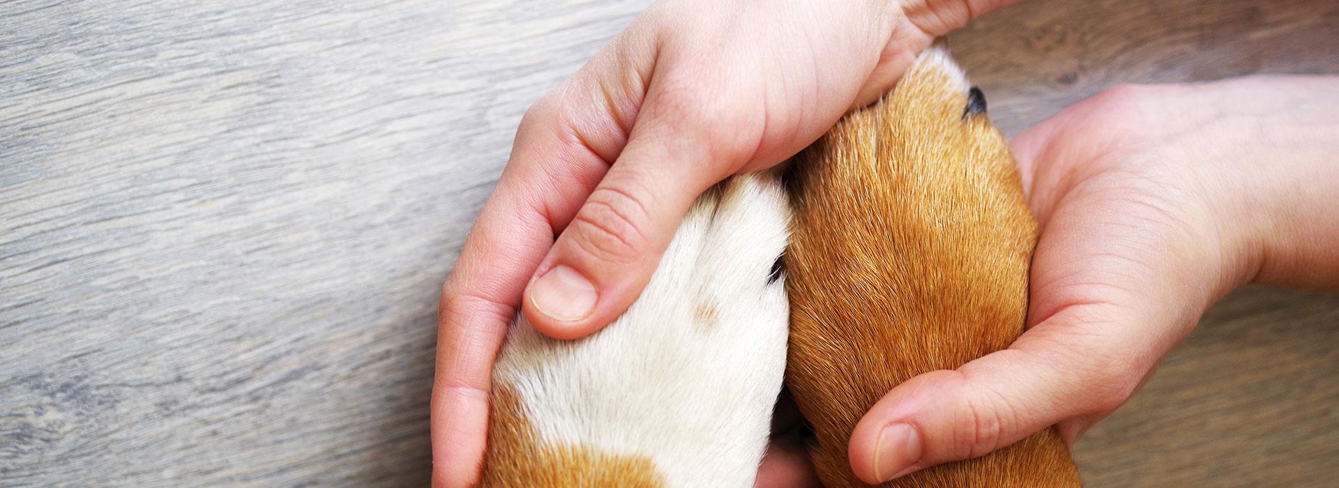 pet-insurance_580012318